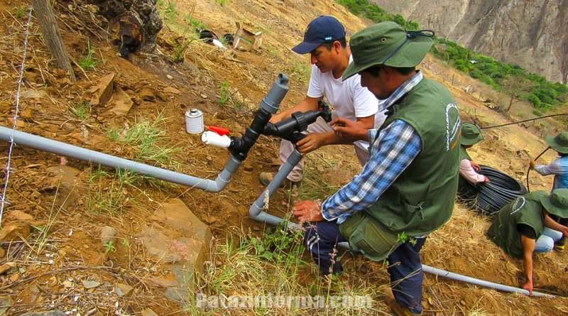Instalan sistema de riego por goteo en chilia pataz informa - Sistema riego goteo ...