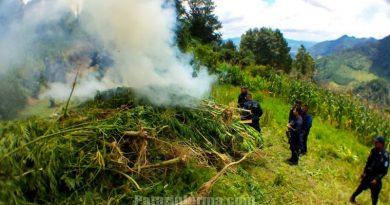 incineran-kilos-de-marihuana-en-huancaspata