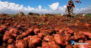 desarrollan-variedades-papa-resistentes-plagas-rancha