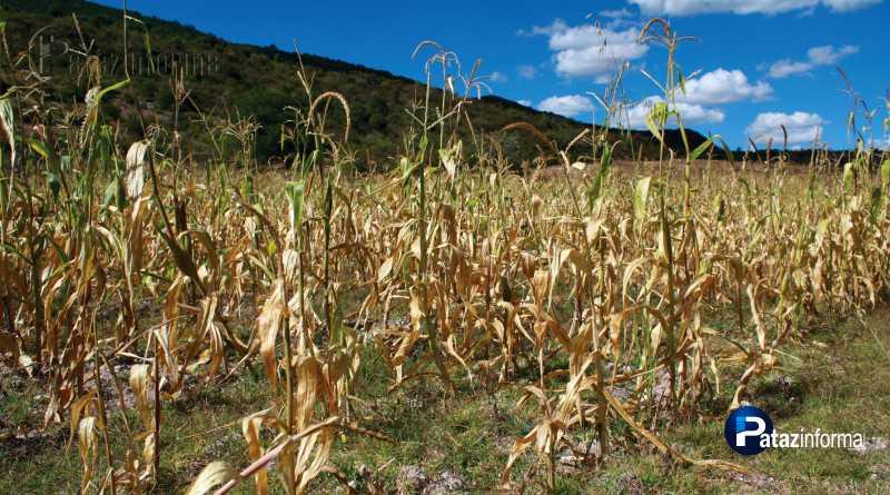 LA LIBERTAD | Peligran cultivos por escasez de agua en el ande liberteño