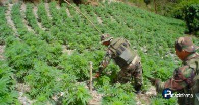 provincias-ande-liberteno-cultivan-marihuana-gran-escala