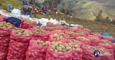 estado-comprara-mas-millon-kilos-papa-agricultores-libertenos