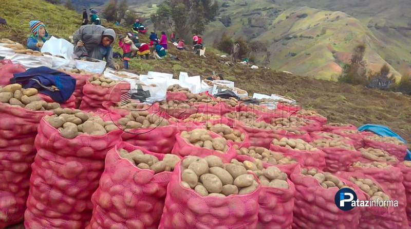 LA LIBERTAD | Estado comprará más de un millón de kilos de papa