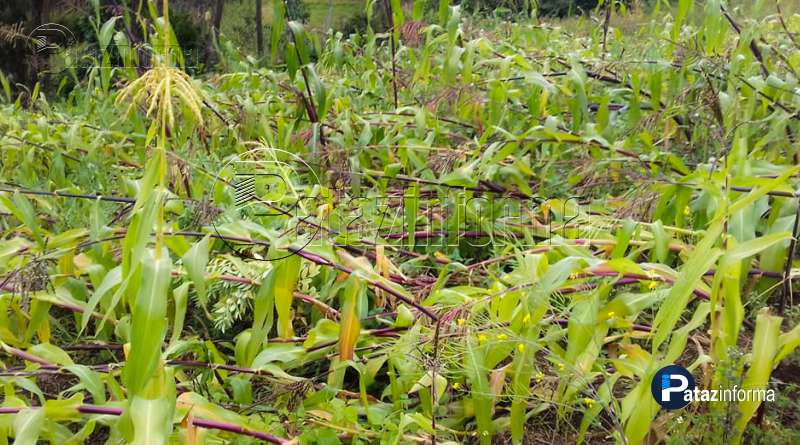 grandes-cantidades-cultivos-destruidos-granizada-vientos-huancaspata