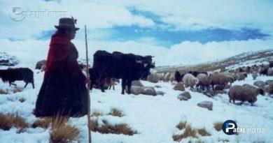 peru-56-mil-afectados-por-bajas-temperaturas-en-11-regiones