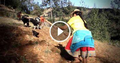 video-feliz-dia-campesino-homenaje-hombre-mujer-campo