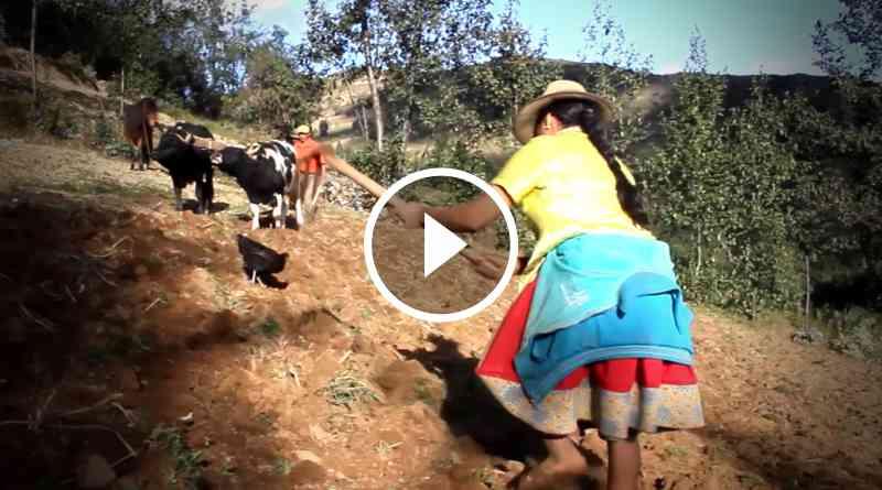 PERÚ | Día del Campesino. Homenaje al hombre y mujer del campo