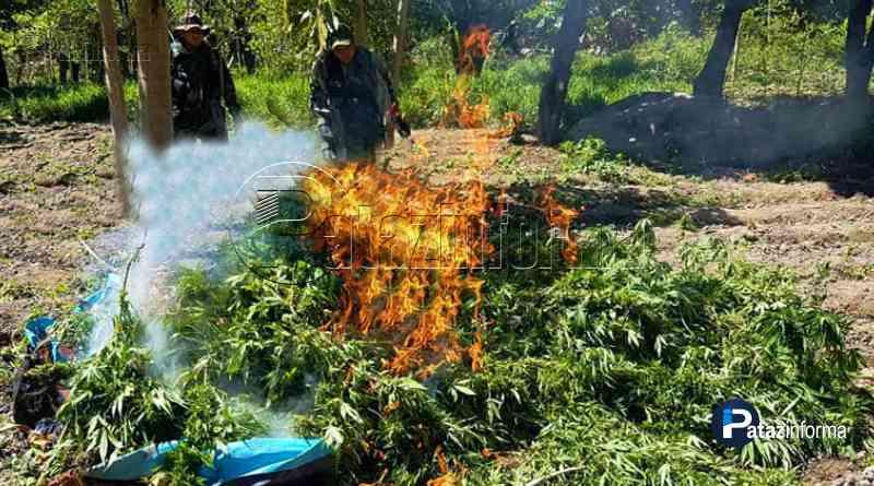 LA LIBERTAD | Incineran 09 hectáreas de Marihuana en el ande liberteño