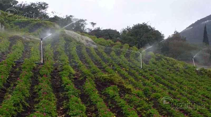 implementaran riego por aspersion 200 hectareas de cultivo en pataz