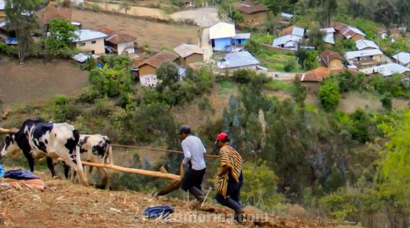 Hermanos campesinos inician siembra en la provincia de Pataz