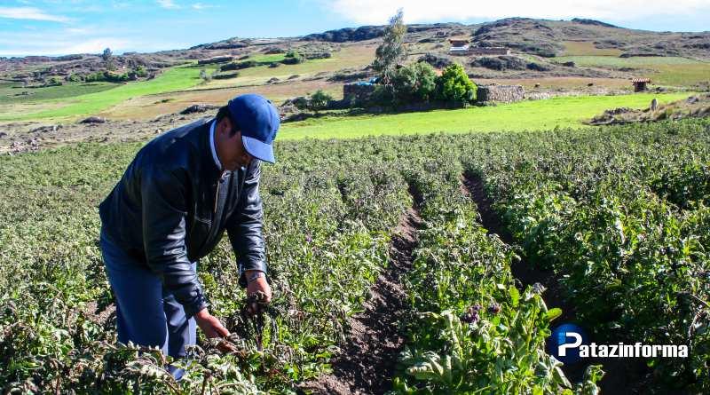 Agricultores preocupados por cultivos afectados por heladas en el ande liberteño