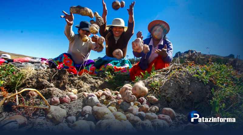 Pese al retraso de las lluvias, producción de papa en Julcán está asegurada