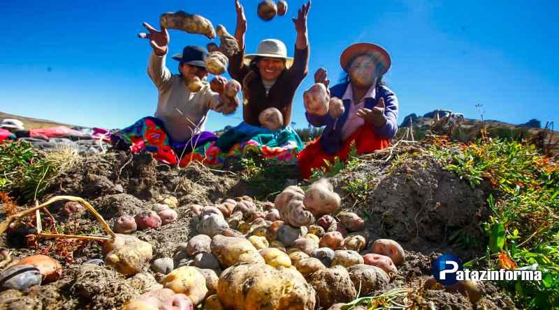 Julcán produce más de 106Tn de papa al año, el 24% de producción nacional
