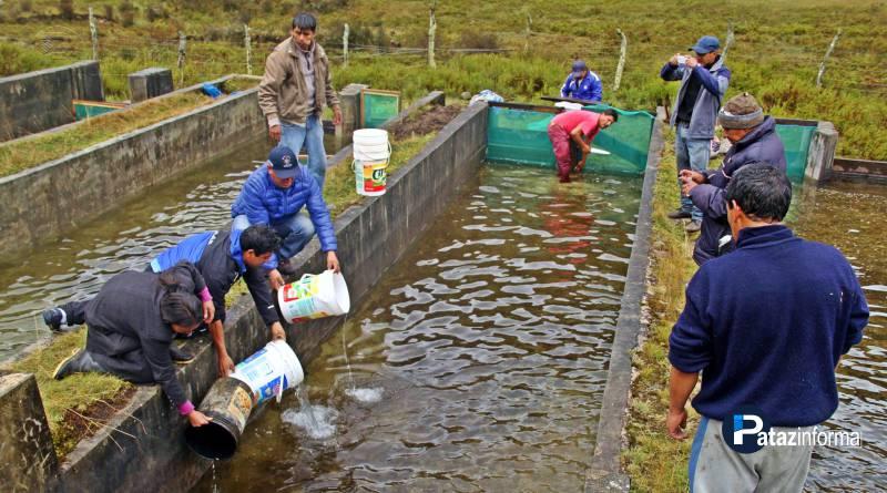 HUAYLILLAS | Siembran 30 mil alevinos en la laguna de Secseragra