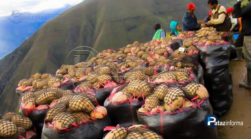 LA LIBERTAD | VI Feria Agrícola de la Papa con agricultores patacinos