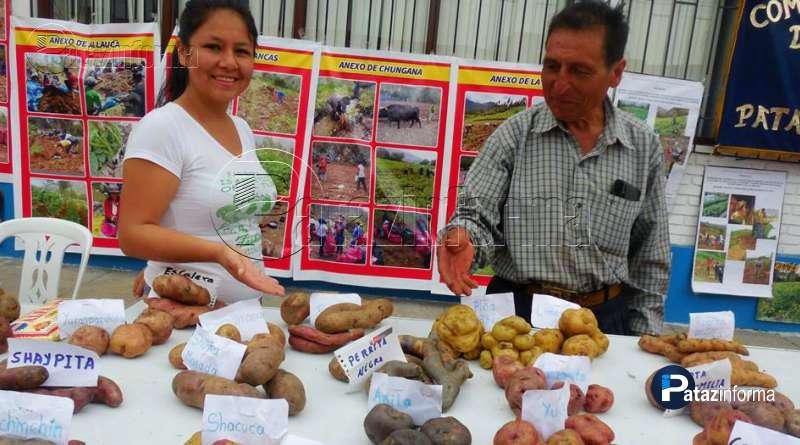 realizaran-sesta-feria-agricola-de-la-papa-trujillo-agricultores-patacinos