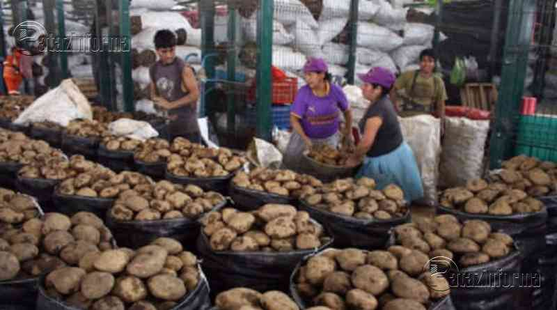LA LIBERTAD | Crece producción de papa, plátano y aves en nuestra región