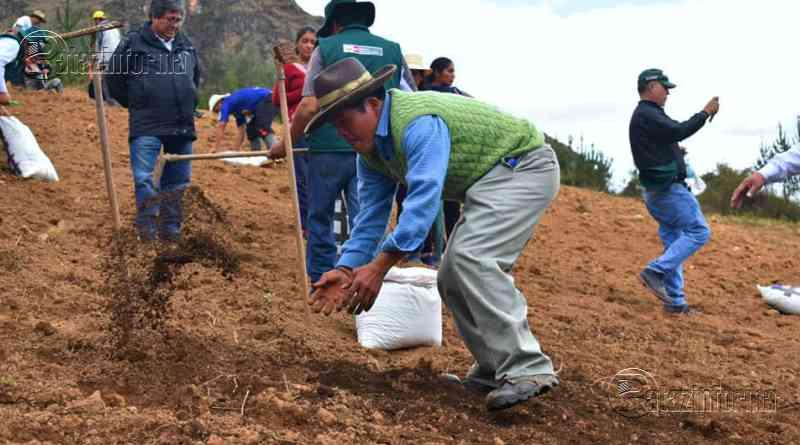 LA LIBERTAD | Implementarán 930Has de pasto mejorado en la sierra liberteña