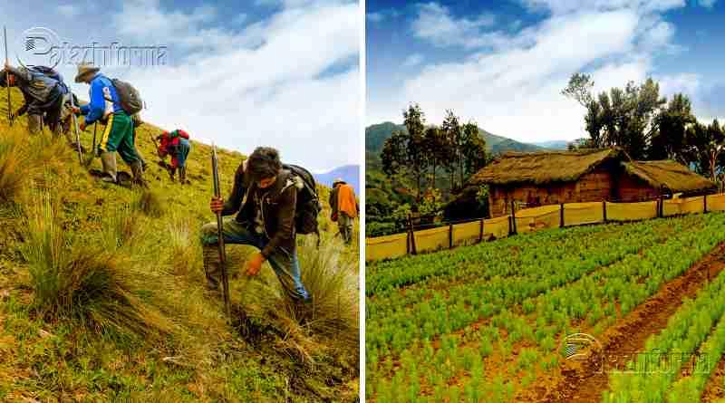 TAYABAMBA | Iniciaron la siembra de 100 mil plantones de pino
