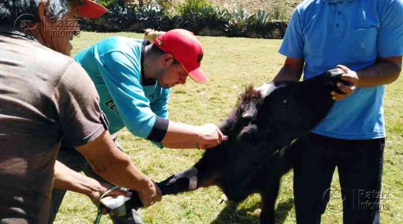 Inician campaña de desparasitación de ganado en Challas