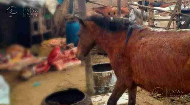 Intervienen camal clandestino donde mataban burros y caballos