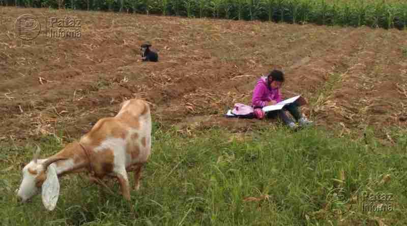 Niña estudia mientras cuida a sus animales en una chacra