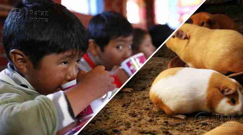 Incluirán carne de cuy y leche nacional en desayunos escolares
