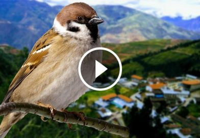 Distrito de Piás participará en torneo mundial de avistamiento de aves
